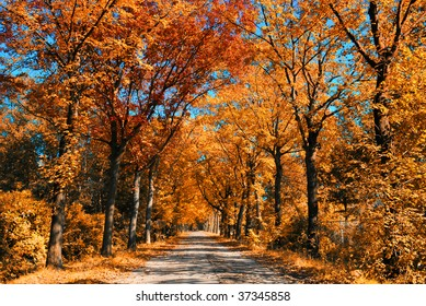 Colorful orange autumn forest on sunny day