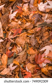 Colorful Orange Autumn Leaves Pattern. Vertical Orientation.