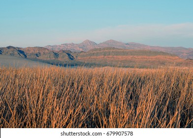 Colorful orange marsh grass highlighted by mountains with orange streaks against blue skies in background.