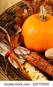 A colorful orange pumpkin is nestled in Indian Corn for a traditional Fall or Thanksgiving decoration