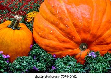 colorful orange pumpkins among the bright autumn flowers