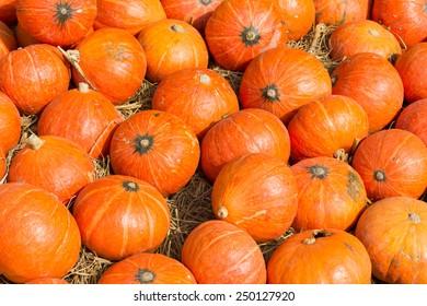 Colorful orange pumpkins in a field.