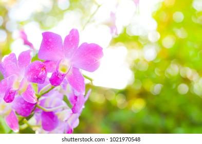 Colorful Orchid flower background, Elemnt of design,select focus