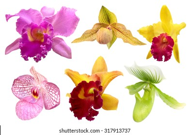 Colorful orchid isolated on white background