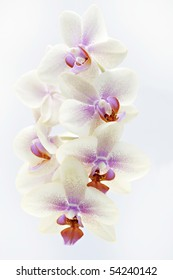 colorful orchid isolated on white