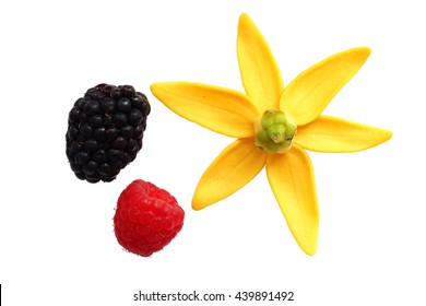 colorful organic object(raspberry,blackberry and ylang-ylang flower) isolated on white background.