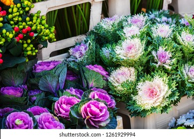 Ornamental Kale Images Stock Photos Vectors Shutterstock