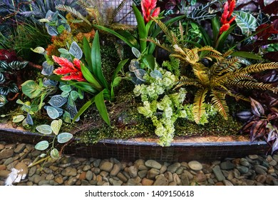 Colorful ornamental plants are grown for decorative purposes in gardens and landscape design projects, as house plants. Besides, ornamental plants play important role in human health and psychology.