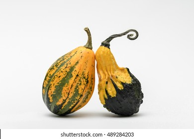 Colorful ornamental pumpkins and gourds isolated on white background. Decorative gourds on white background. Variety of colorful ornamental gourds. Mini gourds.