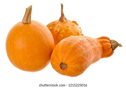 Colorful ornamental pumpkins, gourds and squashes isolated on white background. Variety of colorful ornamental gourds and pumpkins. Mini gourds for Halloween holiday.