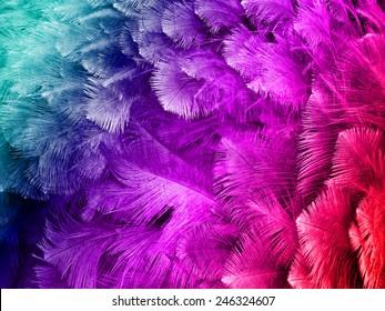 colorful feather background images  stock photos   vectors parrot clip art to color parrot clip art coloring page