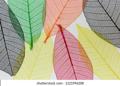 Colorful overlaying fabric leaves in a variety of colors backlit in white light