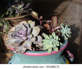 Colorful painted pot with various succulent plants