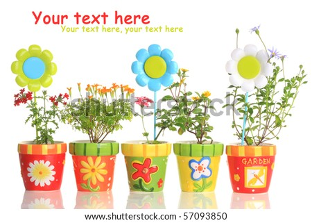 Colorful Painted Pots Pretty Flowers Stockfoto Jetzt Bearbeiten
