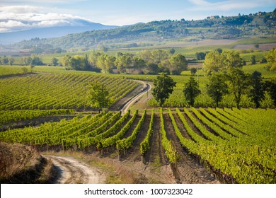 Colorful panoramic view in Tuscany - vineyards close to Montalcino, Italy.