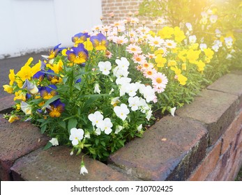 Colorful of pansy flower pot home decoration