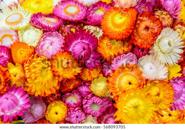 Colorful paper flower background.