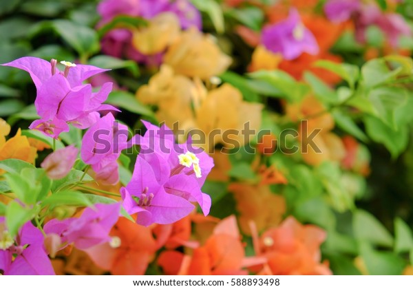 Colorful of paper flower in the garden