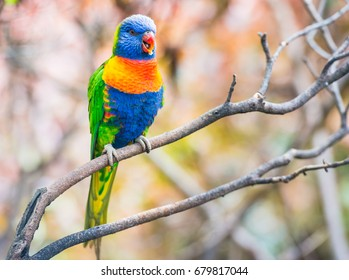 Colorful parrot with blue head, yellow chest and green tail sitting on the branch in Loro Park on Tenerife, Canary islands, Spain with selective focus