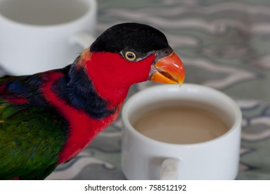 colorful Parrot  with coffee - Papagei trinkt Cafe