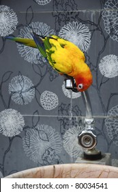 Colorful Parrot drink water