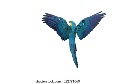 Colorful parrot flying with wings spread on white background