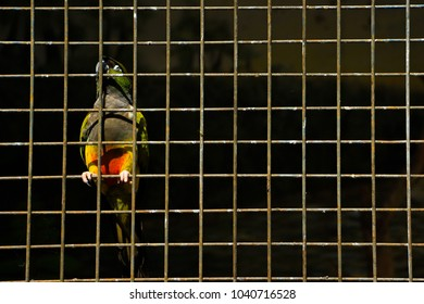 A colorful parrot hangs on a fence
