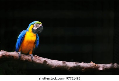 colorful parrot isolated in black background