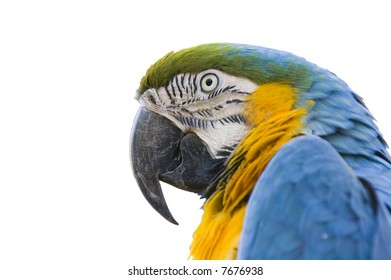 Colorful parrot or Macaw in Closeup