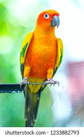 The colorful parrot is relaxing on the fence. This lovebird lives in the forest and is domesticated to domestic animals