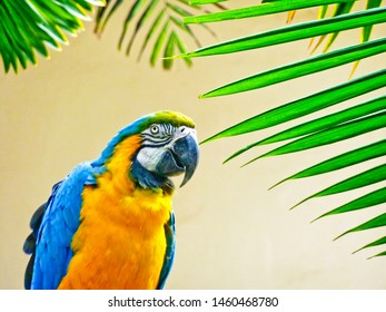 Colorful parrot and tropical palm leaf