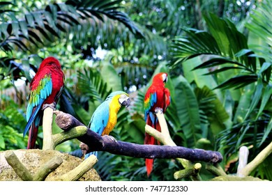colorful parrots in a bird park in Singapore
