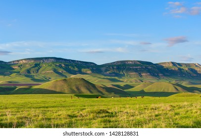Colorful pastures in summer time.