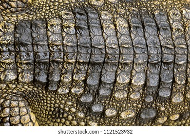 Colorful patterns and crocodile skin for the background.