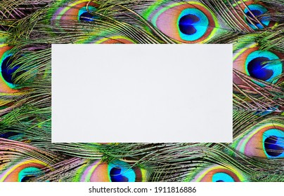 Colorful peacock feathers with paper card note
