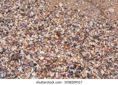 Colorful pebbles and seashells on beach jackstone Australia Sunshine Coast Queensland
