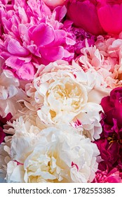 bunter Pfennig auf rosafarbenem Hintergrund