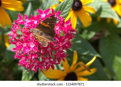 Colorful perennial flowers with closeup of butterfly