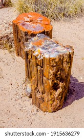 Colorful petrified wood in the badlands of Petrified Forest National Park near Holbrook, Arizona, USA.