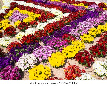 Colorful petunia flower bed decoration in Japanese garden