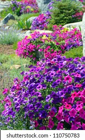 Colorful petunia garden in summer