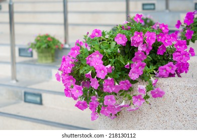 Colorful petunias close-up, selective focus