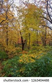 Colorful Photo of Autumn Leaves at Pere Marquette State Park in Grafton, Illinois