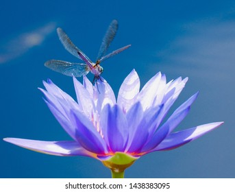 Colorful photo of dragonfly on flower warm summer day.