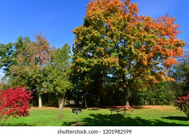 A colorful picnic area in autumn showing a wide range of color.