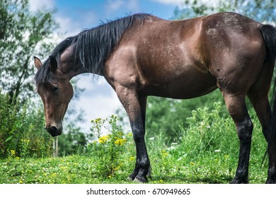 Colorful picture of a horse standing on a meadow.