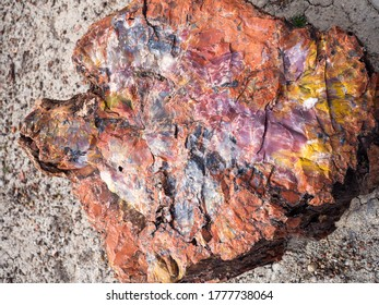 Colorful pieces of petrified wood seen within the Petrified Forest National Park.