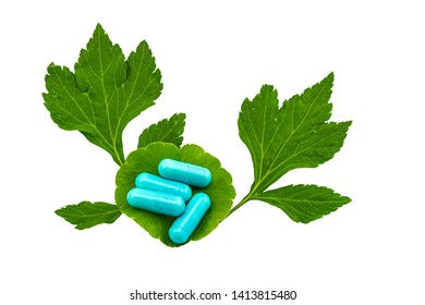 Colorful of pill and green leaf of White mugwort plant (Artemisia lactiflora) with Green Asiatic Pennywort (Centella asiatica ) isolated on white background.Saved with clipping path.
