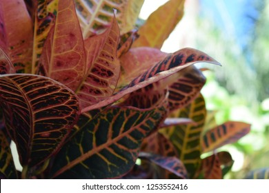 Colorful Plant, Close Up