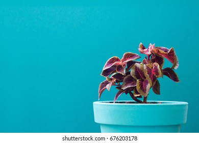 Colorful plant on turquoise background. Minimal creative stillife. Flat lay